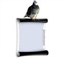 Photo Frame for Birds: 0000104