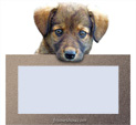 Photo Frame for Dogs: 0001291
